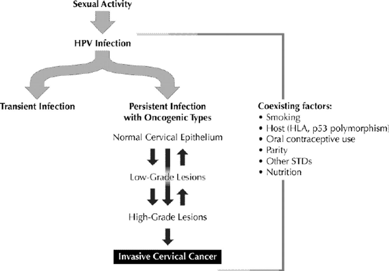 Cervical Cancer Epidemiology Prevention And The Role Of Human