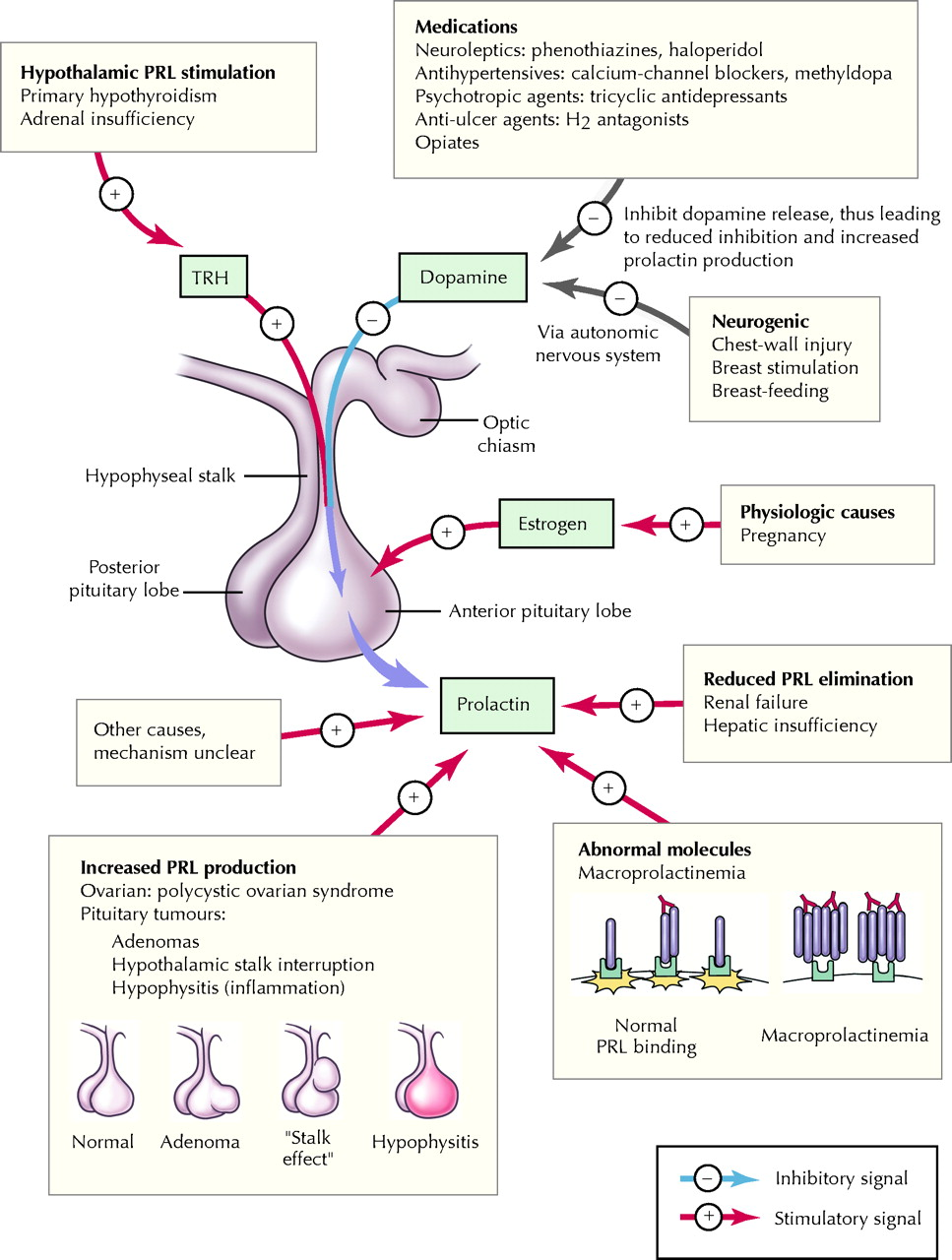 relationship between prolactin and thyroid