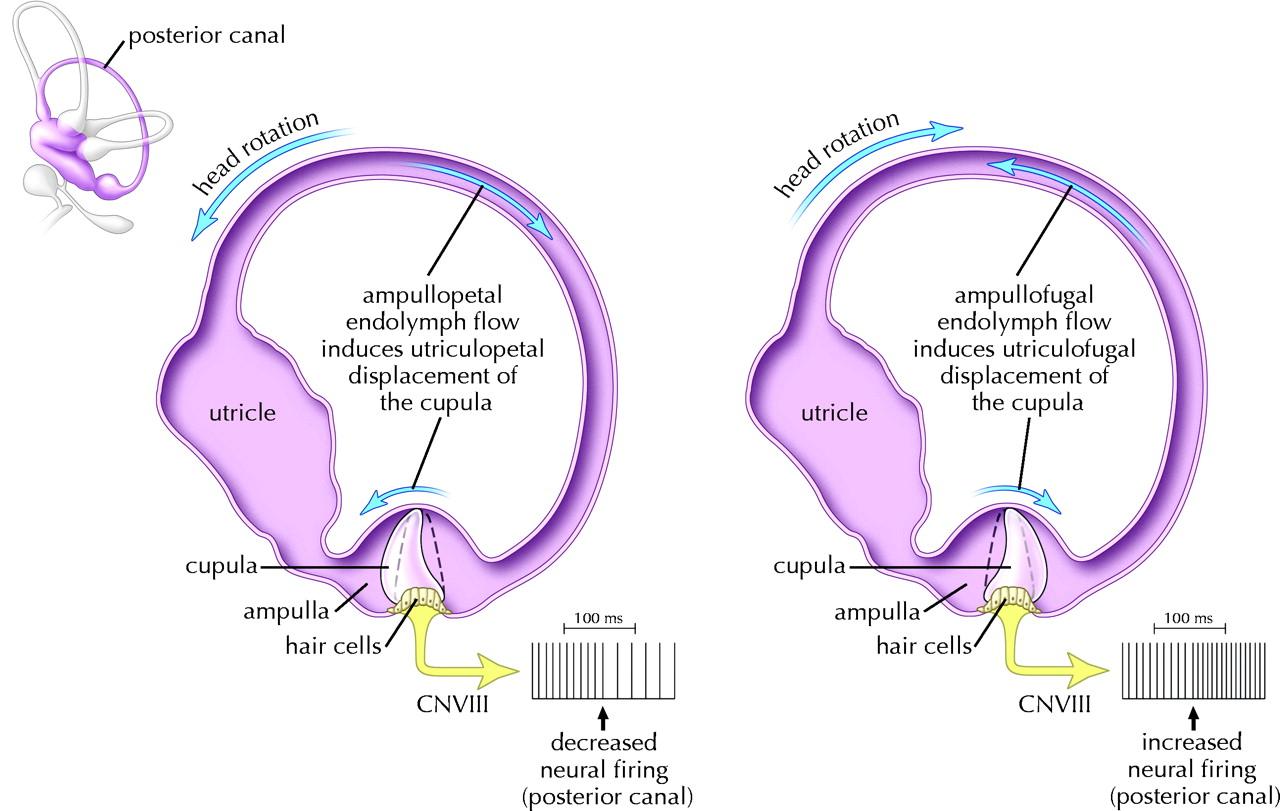 Figure3 | Diagnosis and management of benign paroxysmal
