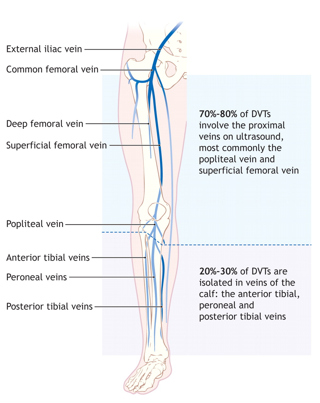 Leg Venous Diagram Residential Electrical Symbols